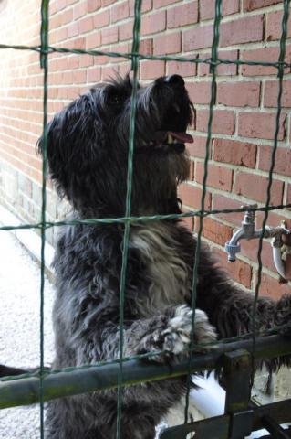 Chiots À Adopter - 10 astuces à connaître - Pro - Blog chien