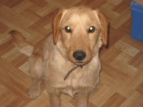 Education Canine Chiot - 10 astuces à connaître - 5 étapes - Tuto dressage